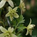 写真: 201104flower 456