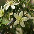 写真: 201104flower 466