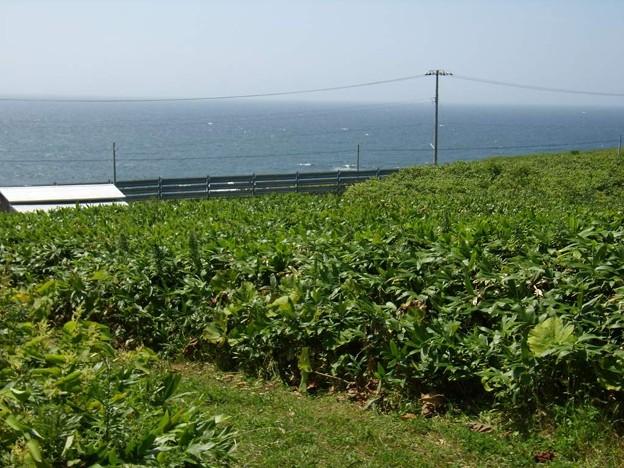 写真: 8_11焼尻島北西岸