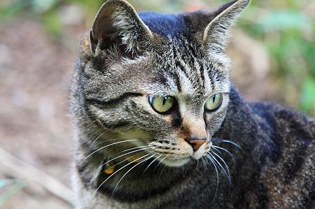 2010.06.12 和泉川 飼い猫