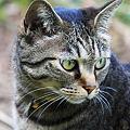Photos: 2010.06.12 和泉川 飼い猫