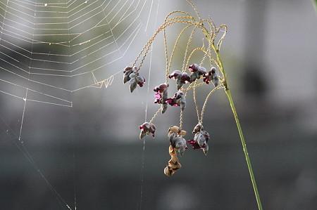 2010.09.02 和泉川 ミズカンナと蜘蛛の巣