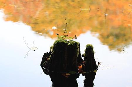 2010.10.28 蔦温泉 菅沼 紅葉の沼面