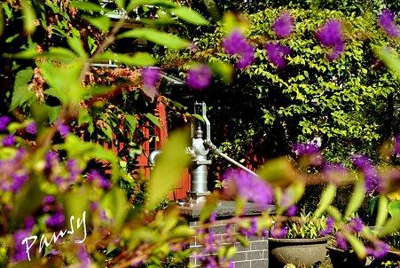 秋紫の向こうの井戸・・