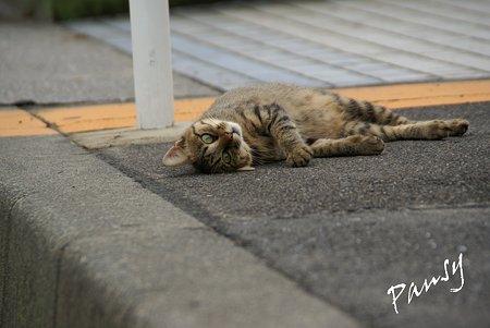 瑞穂埠頭の猫たち・・3