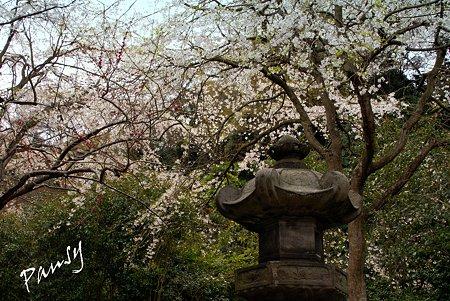 石灯篭と・・安国論寺・・2
