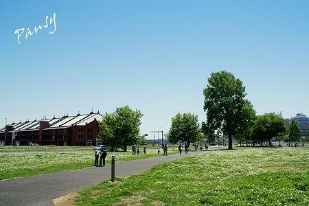 シロツメクサの野原と・・赤レンガ倉庫・・