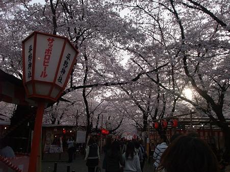 2011年4月10日 平野神社その11