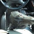 Photos: 車に乗っている時でも