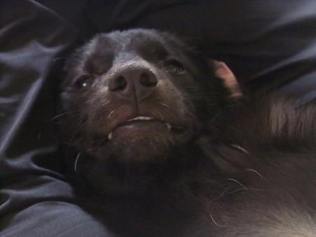 この顔、犬じゃないぞ・・・