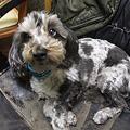 Photos: 誰が見ても当たり前な小型犬