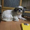 Photos: こら!また上ってる~