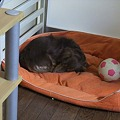 Photos: 一人で寝れるもん♪