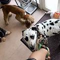 Photos: 保護犬大集合!