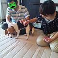 Photos: ママとパパ