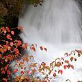 Photos: 日光・竜頭の滝