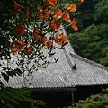 Photos: ノウゼンカズラ咲く、妙本寺!(100703)