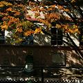 Photos: CAFEの紅葉101103-120