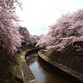 写真: 花見2011