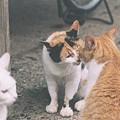 三毛とチャコの鼻キス