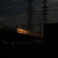 Photos: 夕日に輝く