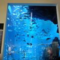 写真: ドバイモールにある水族館