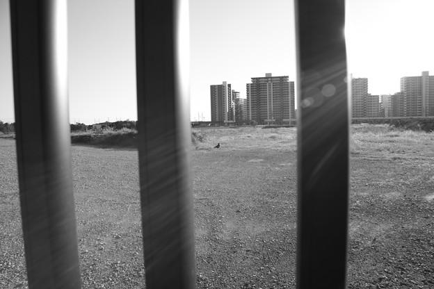 Photos: 自由と陽光