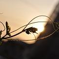 Photos: 夕日を浴びて