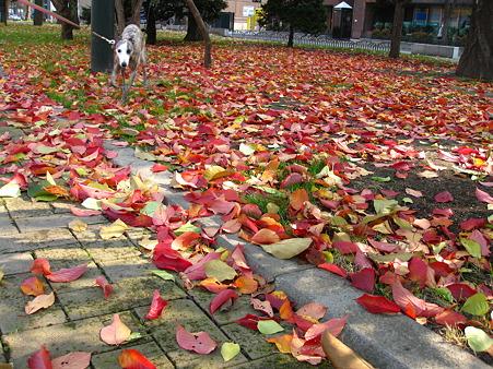 落ち葉のじゅうたん2