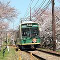 写真: 嵐電 桜の回廊