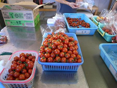 収穫フルティカトマト