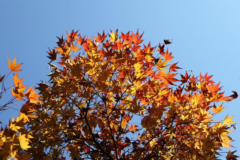 IMG_9755京都の紅葉_2010年11月