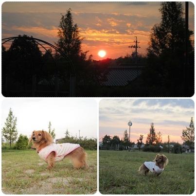 20110929 早朝のお散歩