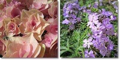 20110611 お花