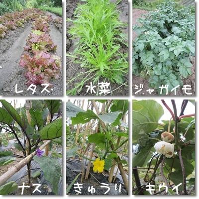 20110611 野菜1