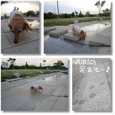 20110726 お散歩1
