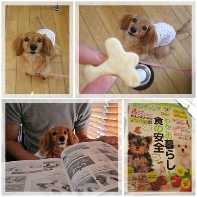 20110828 DOG DEPT2