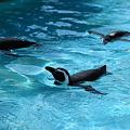 Photos: ペンギン  能登島水族館