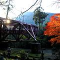 鶴仙渓 モミジ あやとり橋