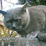 菫色のぬこ sumireirononuko