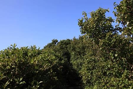 利尻岳-20100814-082803