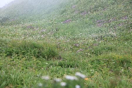 利尻岳-20100814-103220