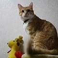 Photos: いのり