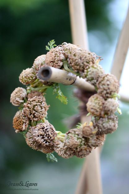 シュンギクの花がらリース
