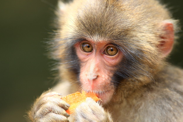 猿と目が合った!?