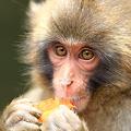 写真: 猿と目が合った!?